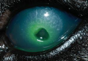 corneal-ulcers